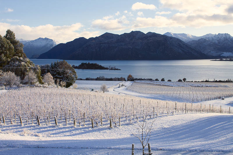 Winter at Rippon Winery